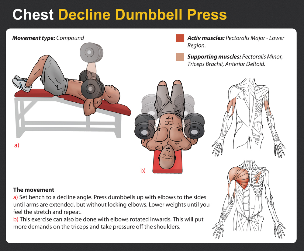 decline dumbbell press - photo #1