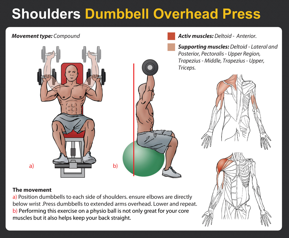 ROUTINE B Overhead Press Muscles Worked