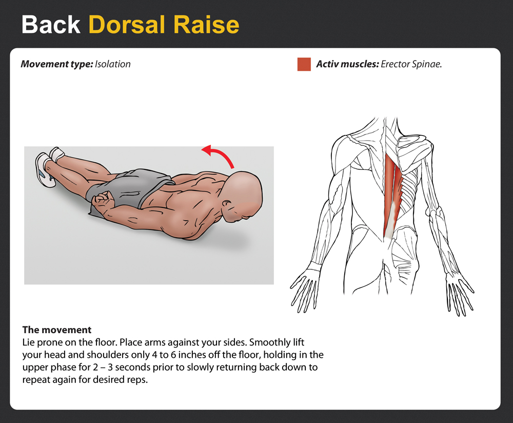 Search Results For Chest Workout With Dumbbell